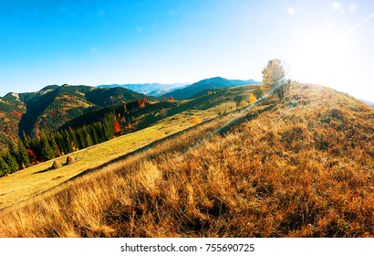 Autumn. Fall. Sunny autumn panorama with mountain, forest and blue sky in the forest of Carpathians - freedom and open space