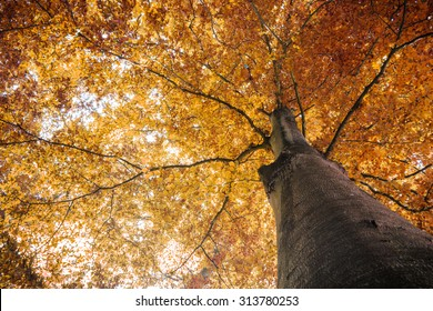 autumn fall tree with orange leaves. can be used for nature, autumn, fall, tree, landscape, environment, forest themes