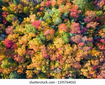 Autumn Fall Wilderness Colors From Above