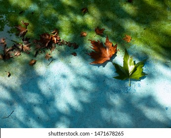 Autumn fallen leaves on the shore of an artificial pond in the light of the evening sun, autumn is coming soon
