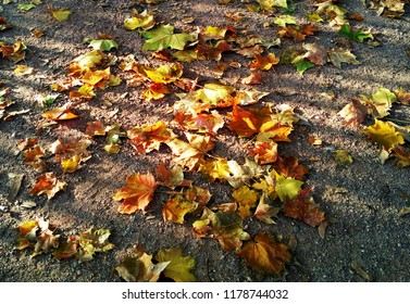 Autumn, fallen leaves and shadow of bars is freedom for leaves, no bars