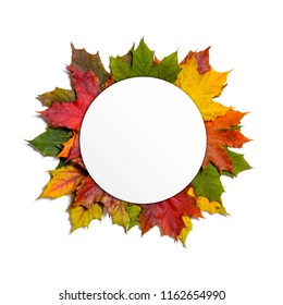 autumn fallen maple leaves isolated on white background with white round card on top