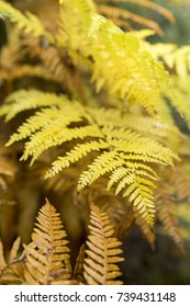 Autumn fern leaves in a sunny day. Abtrasct autumn background.