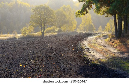 Autumn Field - Shutterstock ID 230416447