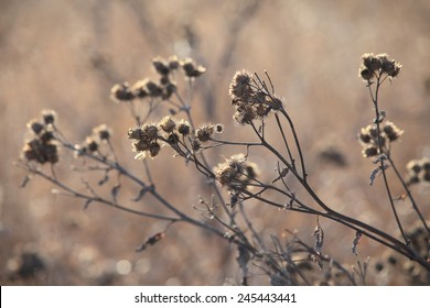 Autumn field with dry grass.
