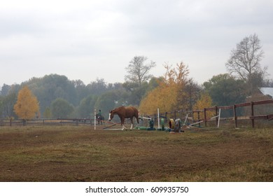 Autumn field with a horse