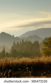 Autumn field scenery in the morning haze, calm color, natural color tone