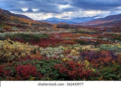 Autumn Fjell in Northern Sweden