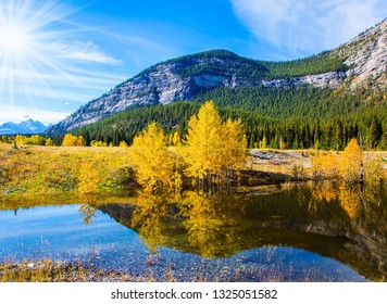 Autumn flood of Abraham lake, Rocky Mountains of Canada. Concept of active, ecological and photo tourism. Artificial Abraham lake reflects the golden foliage of aspen and birches