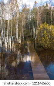 Autumn flooding in the forest. Trees, water and wooden path. Nupuri, Espoo, Finland