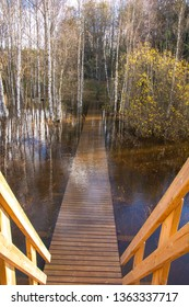Autumn flooding in the forest. Trees, water and wooden walkway. Nupuri, Espoo, Finland