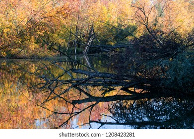 Autumn floodplain landscape