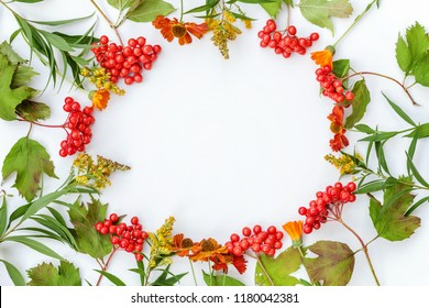 Autumn floral composition. Frame made of viburnum berries and fresh yellow flowers on white background. Autumn fall natural plants ecology wallpaper concept. Flat lay, top view, copy space