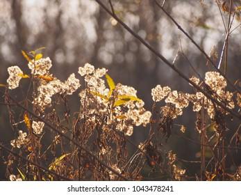 autumn, flower, light