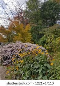 autumn flowers bloom