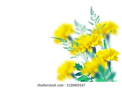 Autumn flowers marigolds isolated on white background.