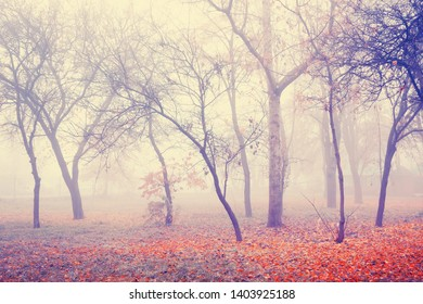 Autumn fog in misty park. Trees with red fallen leaves. Beautiful mist autumn landscape