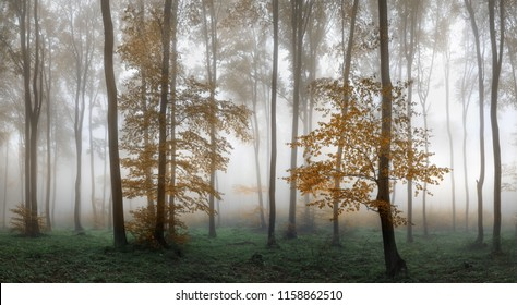 Autumn foggy forest. Balkan Mountains, Bulgaria.