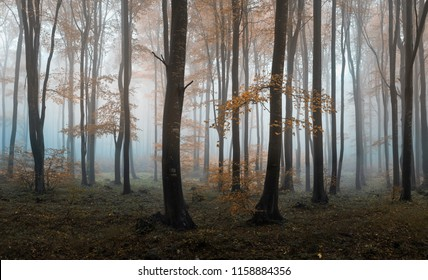 Autumn foggy forest. Balkan Mountains, Bulgaria.