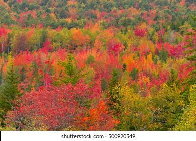Autumn Foliage in Acadia National Park, Maine, USA
