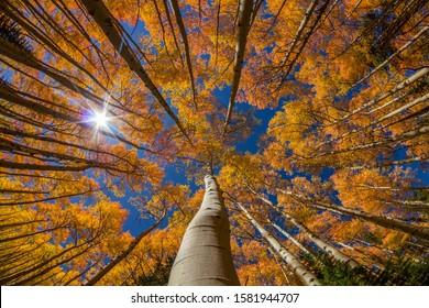 Autumn Foliage in Breckenridge Colorado