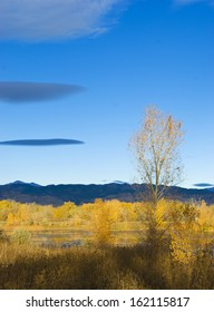 Autumn foliage in a brightly lit early morning wild area with pond on the Colorado prairie