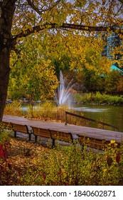Autumn foliage in a Calgary park