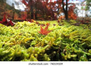Autumn foliage Kyoto