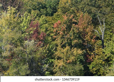Autumn foliage in Land Between the Lakes park in Paducah, Kentucky, USA