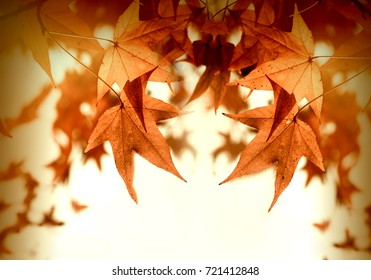Autumn foliage - autumn leaves lit by sun rays (sunbeams) beautiful nature in autumn