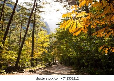 Autumn Foliage in Mt. Seorak
