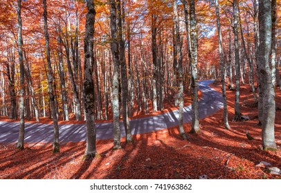 The autumn with foliage in the National Park of Abruzzo, Lazio and Molise (Italy)