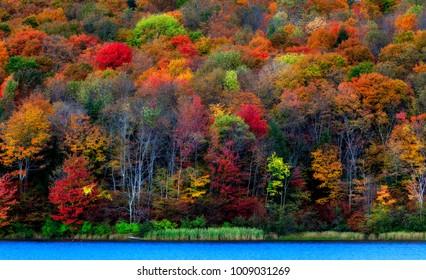 Autumn foliage NY