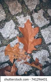 autumn foliage on cobblestone street surface