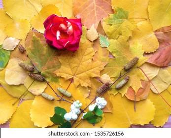 Imágenes Fotos De Stock Y Vectores Sobre Leafwallpaperhd