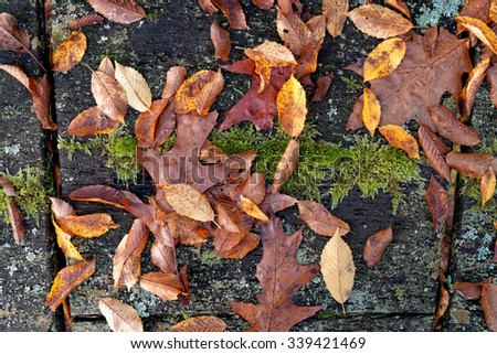 Autumn Foliage Still Life