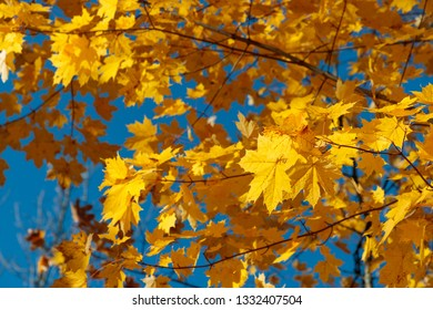 autumn foliage of trees in the daytime