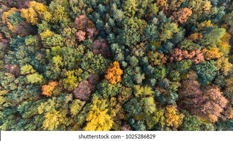 Autumn forest aerial drone view