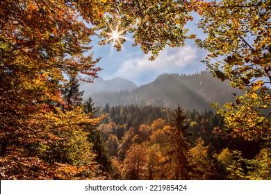 Autumn forest again sunrise in Bavaria Alps, Germany