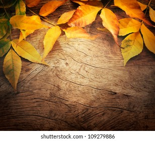 Autumn forest background. Fall Acorns on tree bark and season colorful leaves. with copyspace