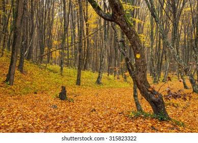 Autumn forest as a background. Autumn landscape