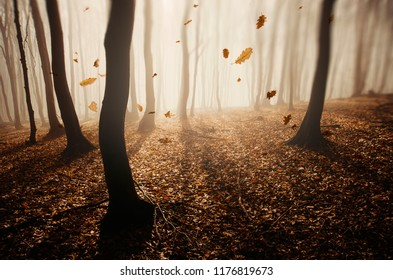 autumn forest background with leaves in the wind
