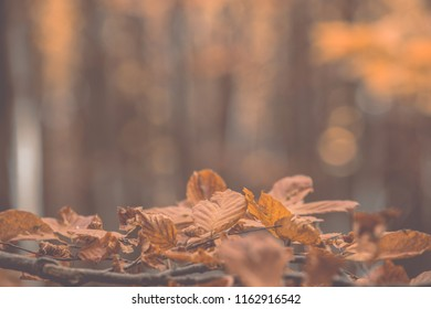 Autumn forest background. Mat filter and shallow depth of focus.