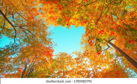 Autumn forest background. Vibrant color tree, red orange foliage in fall park. Nature change scene. Yellow leaves in october season Sun in blue sky Sunny day weather, bright light banner, border frame - Shutterstock ID 1785983795