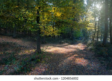 Autumn forest in the backlight