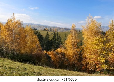 an autumn forest and a beautiful blue sky powered