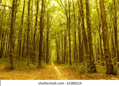 Autumn forest. Beautiful gold fall in forest.