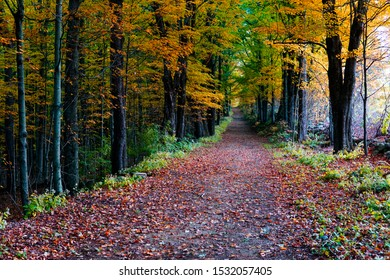 Autumn forest with beautiful yellowish trees. Footpath through forest, covering with fall leaves.