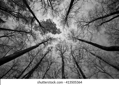 autumn forest black and white photo
