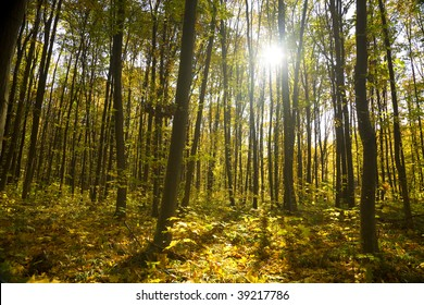 autumn forest / bright colors of leaves / sunlight / horizontal